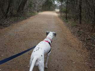 Leash laws are not simply recommendations.