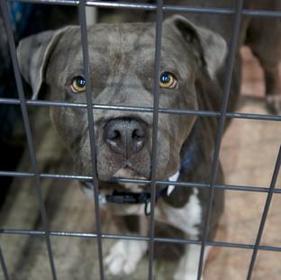 Best Friends Animal Society Hurricane Harvey Rescue