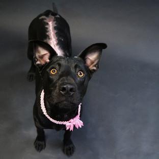 Bastrop Animal Rescue Mia suffered severe sunburn.