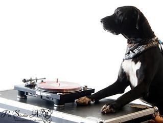Cherry Cola Dog: Art + Dogs