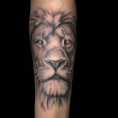david lion.jpg