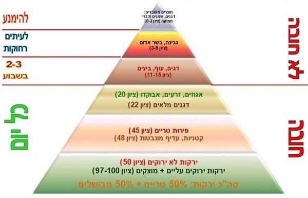 פירמידת מזון