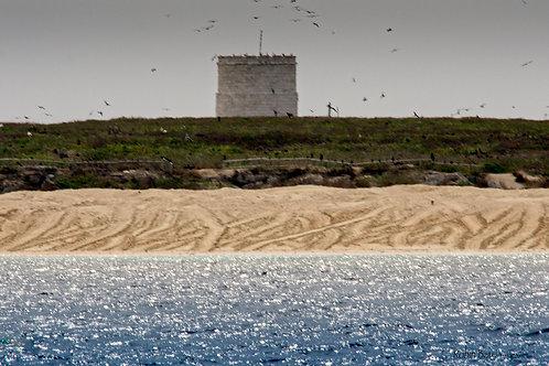 Turtle Tracks - Raine Island GBR Australia