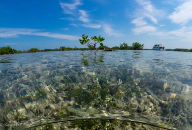 Cuba Mangroves