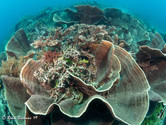 Indonesia Coral Reef