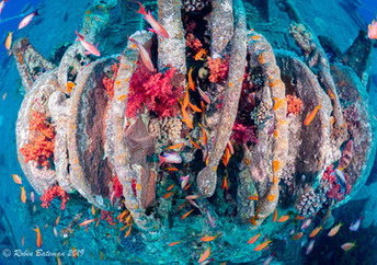 Wreck Colors Red Sea.jpg