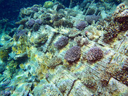 Tile Wreck Red Sea.jpg