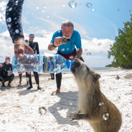 Hutia Thankful for some Water
