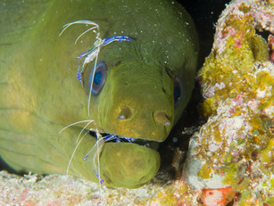 Moray Cleaning Station