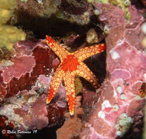 Indonesia Star Fish.jpg