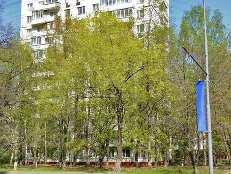 Улочки столицы: Бакинская улица