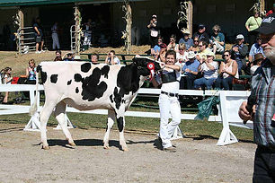 4H Dairy Show