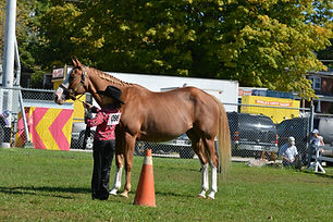 Youth Show (Horses)