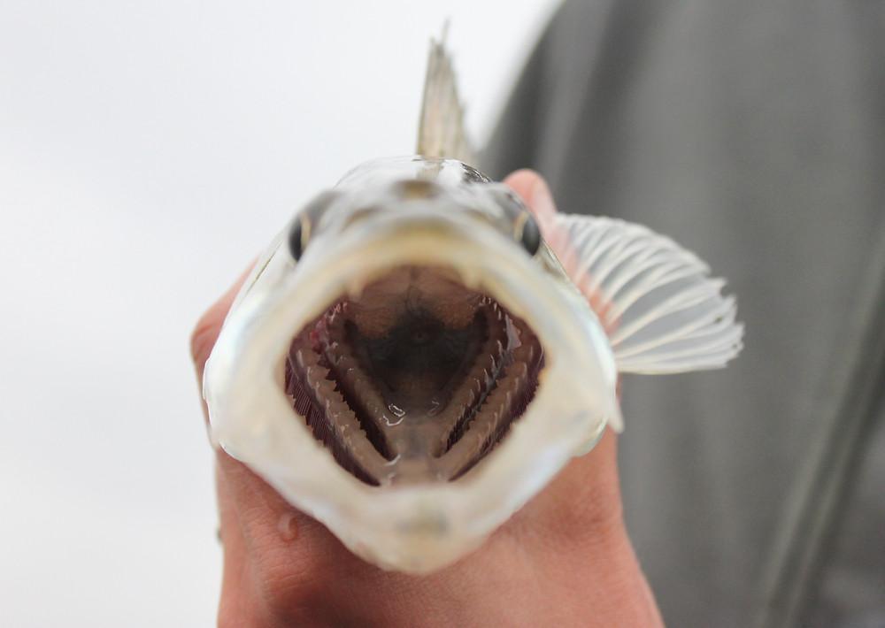 Visje van een eerdere proefvaart.