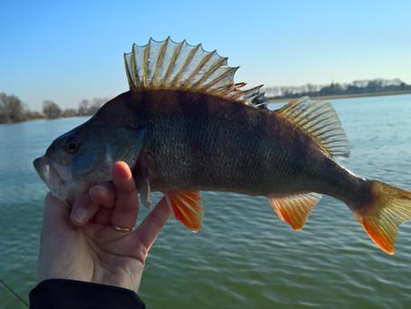 Zeven beten, vijf vissen