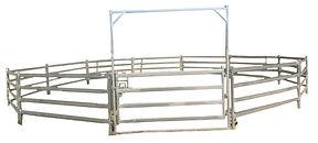 Premium 4 Rail Horse Coral01.jpg