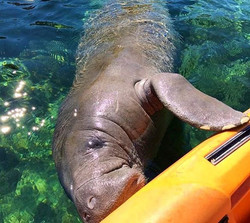 Fun day with the Manatee