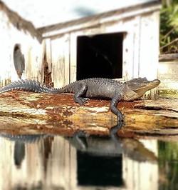 Go Gators..