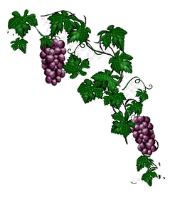 right%20side%20grapes%20(2)_edited.png