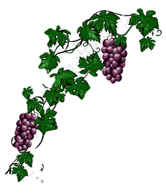 left%20side%20grapes_edited.png