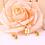 Thumbnail: Set Acero Inoxidable + Oro 18K