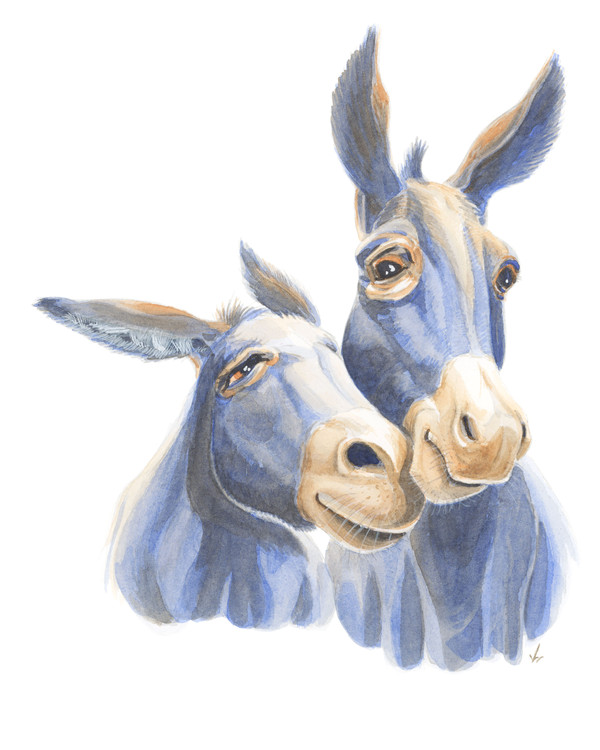 Donkey Snuggles