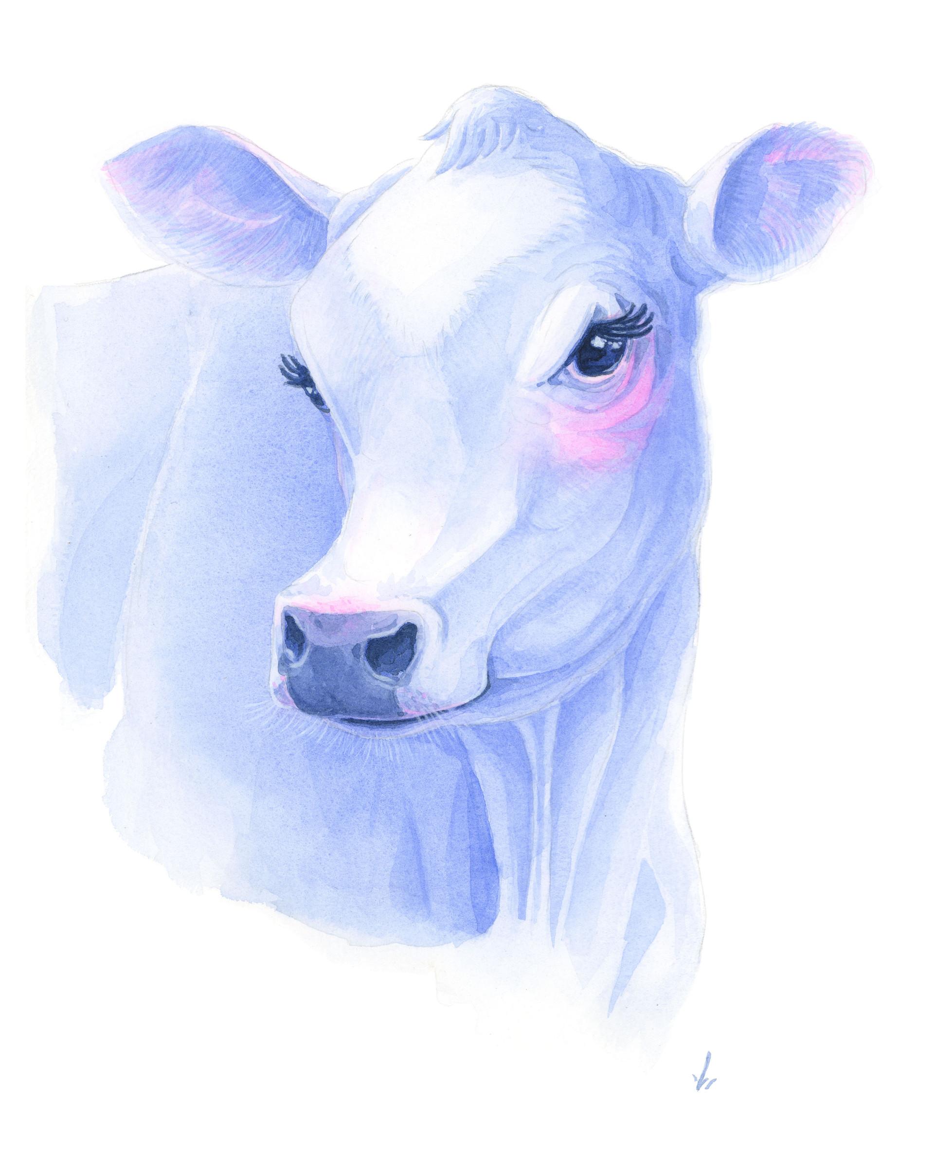 Demure Cow
