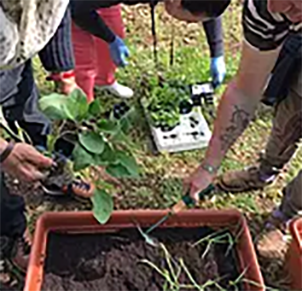 6 giardinaggio san francesco.png