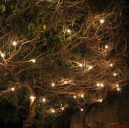La glycine éclairée - The illuminated wisteria