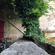 La glycine bicentenaire - The bicentennial wisteria