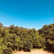 La parc- The park