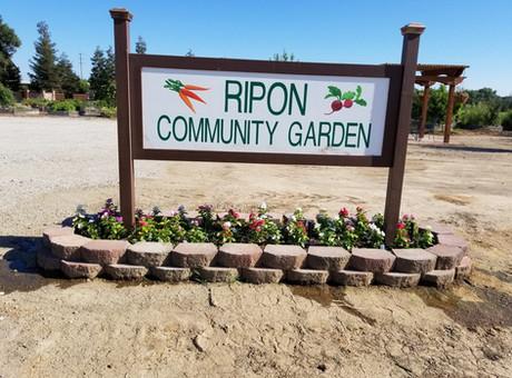 Ripon Community Garden: Call To Action