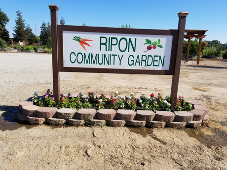 Ripon Community Garden: Call To Action