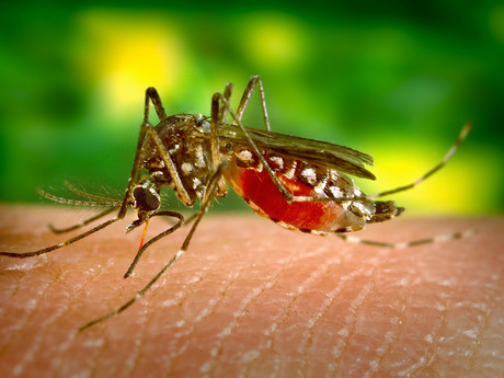 Press Release: Local Area Mosquitoes Test West Nile Virus Positive