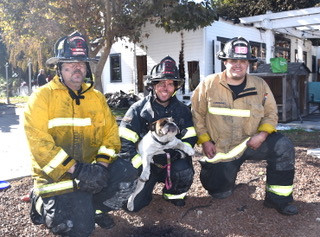 Firefighters Save Soot-Covered Dog During House Fire