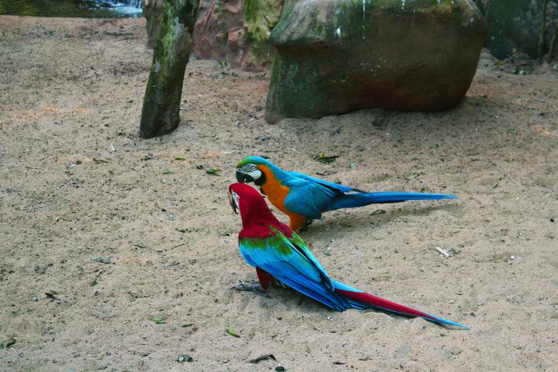 Parque das Aves, Paraná. Brazil