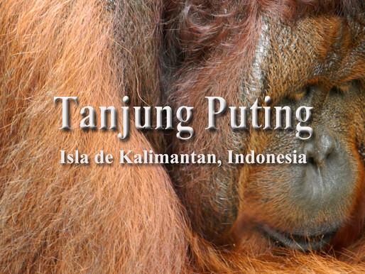 Aemonía y ternura en Tanjung Puting
