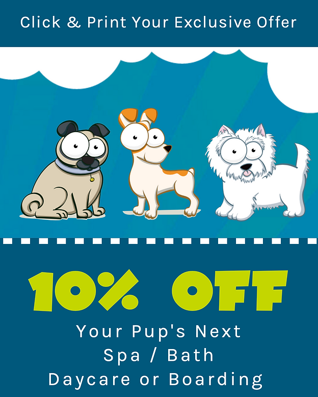 Exclusive offer for dog grooming, daycare or bording   Hounds Town Detroit in Troy, Michigan