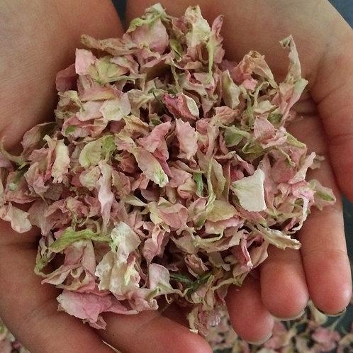 Pale Pink delphinium petals