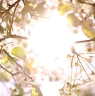 bloom-tree-still.jpg