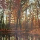 deep-autumn-pond-still-hd.jpg