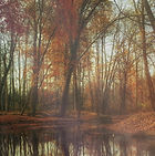 deep-autumn-pond-still-hd.jpg