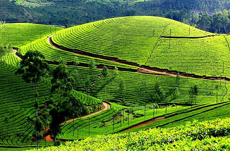 Sri Lanka Tour----MinneriyaNational Parks