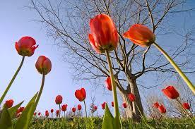 Spring, Spring, stop teasing us