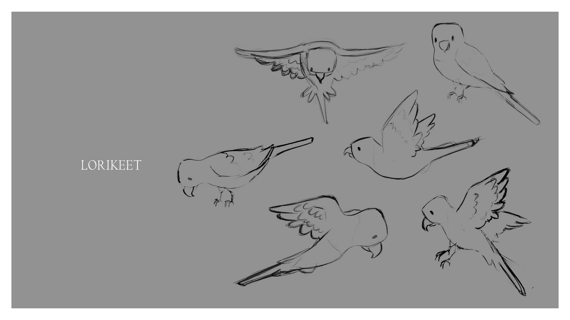 Lorikeet_Bird Character sheet.tif