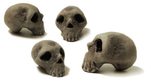 skulls2s.jpg