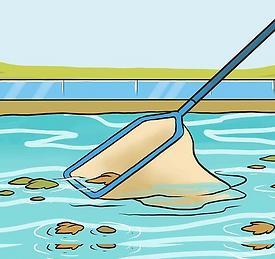clean pool web.png