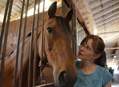 Canmor Farms takes in farm families and their animals as the 2017 wild fires worsen.
