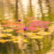 Waterlilies XII.jpg
