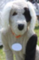 hond10.jpg